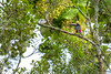 47. Around Palenque, Chiapas, Mexico-7.jpg (gaillard.galopere) Tags: america amérique animaux chiapas couleur gaillardgalopere mex mx mexico mexique palenque travel vegetations voyage animal animals animauxsauvages arboles arbre arbres ave bird bright brillant brillante claro color colorful coloré forest foret green loverlander lustroso oiseau overland overlanding toucan tree trees verde vert viesauvage wild wildlife wood
