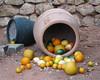 (Kelvin P. Coleman) Tags: canon powershot par staustell edenproject attraction temperate mediterranean biome greenhouse citrus fruit display exhibit lemon lime orange grapefruit food terracotta jar indoor