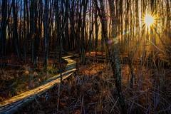 Lighting The Way (Wes Iversen) Tags: dryden michigan sevenpondsnaturecenter nikkor18300mm nature sunflare hss sliderssunday woods forest boardwalks trees autumn