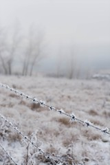 Now all my teachers are dead except silence (Tracey Rennie) Tags: fence silence wsmerwin cochrane barbedwire winter hoarfrost