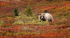Alaska_007