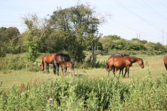 IMG_2987 (zaphad1) Tags: aylestone meadows leicester fields river british landscape english horses summer country water reflections canon eos 20d art reference photo creative commons riverside zaphad1