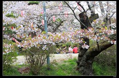 nEO_IMG_DP1U3775 (c0466art) Tags: park old trip travel flowers light green castle pool beautiful japan canon season spring scenery afternoon bloom sakura 2015 trres 1dx c0466art