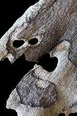 IMG_4988 (j.towbin ) Tags: macro texture nature faces holes bark minimalsim allrightsreserved