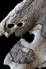 IMG_4988 (j.towbin ) Tags: macro texture nature faces holes bark minimalsim allrightsreserved