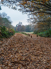 Winter Walk St Marthas EC080327_14 (tony.rummery) Tags: autumncolours em10 guildford leaves mft microfourthirds omd olympus stmarthas surreyhills woods england unitedkingdom gb