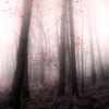 La naissance (david49100) Tags: 2016 maineetloire seichessurleloir arbres d5100 décembre nikon nikond5100 trees