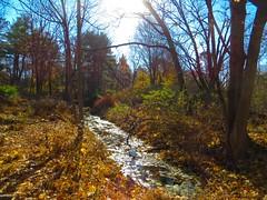 IMG_9129 (rpealit) Tags: scenery wildlife nature east hatchery hackettstown