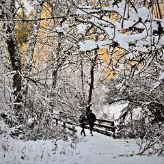 East Bridge 1 15 2017 (rbdal (Rick Dalrymple)) Tags: bridge trail snow winter january noblewoodspark citypark hillsboro washingtoncounty oregon d7000 nikon
