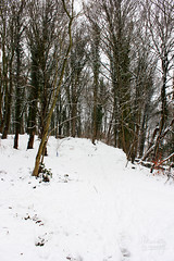 Like snow in the air (Maddilly M.G.) Tags: snow neige enneigé paysage landscape jour daylight winter hiver sortie dehors outside outdoor extérieur exterior promenade bois forest forêt arbre arbres tree trees chemin way doux sweet silence douceur paisible calme calm