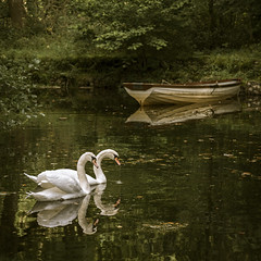 Swan lake (Peter Henry Photography) Tags: water reflection swan boat woodland woods trees lakedistrict