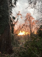 Sunset in Mordor (kellimatthews) Tags: trees landscape winter oregon outdoor pink frozen ice icestorm surreal sunset