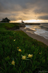 Event Horizon (Aron Cooperman) Tags: aroncooperman california december2016 escaype landscape northerncalifornia openlightphoto santacruz sunrise wbpa westcliffdrive nikond800 nikon1424 flowers iceplants itsbeach lighthouse