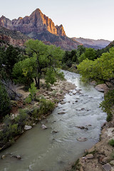 Virgin River, Zion National Park (Rod Heywood) Tags: zion zionnationalpark utah nationalparks virginriver cottonwoods trees river sunset mountain riverside banks iconic scenic landscape watchman thewatchman springdale