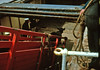 Jul71 Loading Cattle RMS Claymore ,Isle Of Coll (shipcard) Tags: macbrayne coll scotland cattle ferry westhighlands isleofcoll