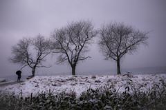 Winterspaziergang (dinos-fotowelt) Tags: winter schnee werrameissner spaziergang regenschirm bäume