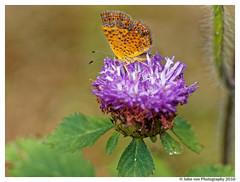 Butterfly (John von Friedhof) Tags: 3where florida flowersplants leaf mzuiko60mmf28 macro olympusem10 park plant wildlife butterfly green johnvonphotography northamerica propernouns unitedstates