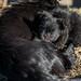 Female dog feeding its puppy