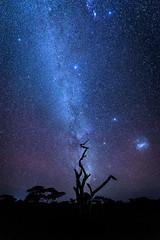 Southern hemisphere night sky with the Milky Way and the fantastic Magellanic Galaxy clouds, Tanzania (diana_robinson) Tags: southernhemisphere nightsky milkyway magellanicgalaxyclouds stars nightphotography tanzania snag night eastafrica nikonflickraward abigfave sky