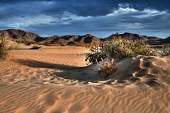 Las dunas de los Genoveses (domimb_) Tags: naturaleza landscape plantas playa paisaje arena almeria cabodegata dunas genoveses