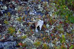 Our bones () Tags: travel mountain nature moss travels russia bone taiga ural