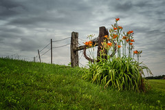 Over and Beyond (Elizabeth_211) Tags: flowers clouds fence landscape 50mm tennessee 6d jacksontn westtn sherielizabeth