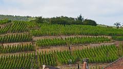 2012.09.03.068 RIBEAUVILLE - le vignoble (alainmichot93 (Bonjour à tous - Hello everyone)) Tags: 2012 france alsace hautrhin ribeauville architecture vignoble vigne