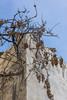 Old vine (Ivanov Andrey) Tags: vine grapes bunchofgrapes old dry raisins wine fruit morning shadow winter sky blue wall corner house building architecture walk village journey vilaflor tenerife spain
