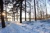 IMG_3149 (wozischra) Tags: berlin heiligensee spaziergang baumberge höchster baum altheiligensee