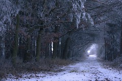 At the end awaits a new beginning (frantiekl) Tags: way forest trees snow frost footpath nature landscape christmas walking outdoors cold czechrepublic winter bravo