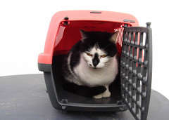 Claudia (ute_hartmann) Tags: claudia katze cat transportkorb spielzeug