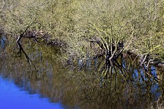 Roots and Reflections (rustyruth1959) Tags: nikon nikond3200 tamron16300mm yorkshire calderdale ripponden reservoir batingsreservoir water trees roots branches reflections outdoor blue nature