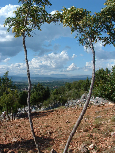 Međugorje, Összehajló fák