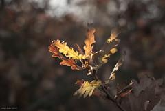 Evaporation (oskaybatur) Tags: bokeh dof nature winter december morninglight pentax pentaxk10d justpentax pentaxart oskaybatur 2016 türkiye turkey turkei fall evaporation