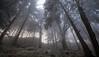 forêt [fɔʀɛ] f (Toni_V) Tags: m2402694 rangefinder digitalrangefinder messsucher leicam leica mp typ240 elmaritm12828asph hiking wanderung randonnée escursione wald forest wood bosco belchenflue solothurn fog nebel mist sunrise sonnenaufgang switzerland schweiz suisse svizzera svizra europe ©toniv 2016 161229 jurahöhenweg winter frost