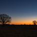 Pembridge sunset (dgmann11) Tags: pembridge sunset trees sky
