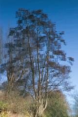 The upside down world 3 (smir_001 (on/off)) Tags: winter january river avon water riveravon bath england somerset canoneos7d tree landscape weir bathnes reflection polariser distortions trees britishwaterways scenery upsidedownworld bluesky clouds upsidedown