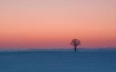 A Frosty Night (Mirek Pruchnicki) Tags: wacławice województwopodkarpackie polska winter snoow frost tree lonelytree lonely fields evening