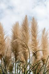 Tenderness (DVchigarev) Tags: plant outdoor sky clouds bokeh sigma 35 35mm 14 art canon 70d sochi russia subtropical