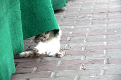Happy cat (tola_93) Tags: cat shan animal animals green street baby babycat love katze cute süs