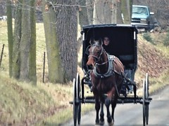 Amish Lady with horse and buggy (Lana Pahl / Country Star Images) Tags: amishcountry ohioamish horsephotography