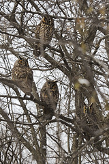 Camouflage (eddee) Tags: wauwatosa wisconsin countygrounds nature urban environment winter owls birds camouflage