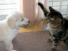 Make my day! (Padrone) Tags: dog playing cute cat puppy explore personalfavorite highfive furryfriday clem miesha interestingness427 i500