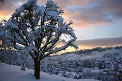 Thal (SG) - Switzerland (Kecko) Tags: schnee winter snow geotagged schweiz switzerland evening abend europe swiss kecko ostschweiz 2006 rheineck thal lutzenberg specnature swissphoto geo:lat=47464776 geo:lon=9581167