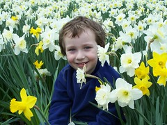 Hiding in the daffodils (DayDayDad) Tags: flowers boys smile tag3 taggedout kids children fun tag2 tag1 child brothers