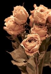 Dried Roses No. 1 [8731] (dminton) Tags: flowers roses black macro leaves yel