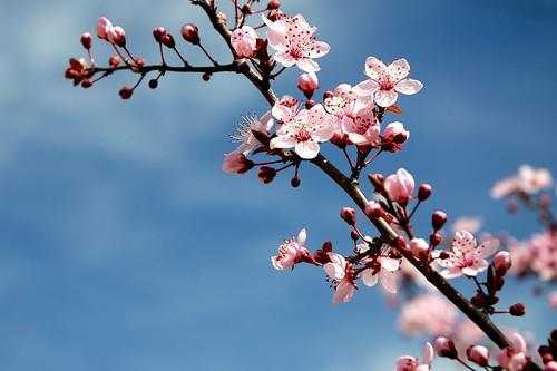 Spring signs by cuellar