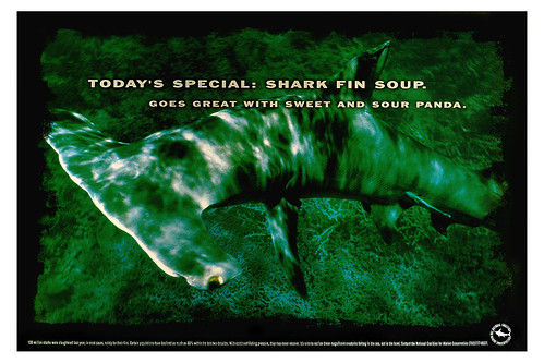 Today's special: shark fin soup. Goes great with sweet and sour panda.
