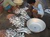 Ferry Wharf 064 (Sanjay Shetty) Tags: ferry wharf bhaucha dhakka