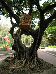 heartful tree (yewco) Tags: park tree hongkong big heart shape  sheungsui